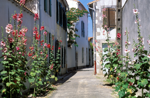 Nouvelle-Aquitaine「Hollyhocks in alleyway of village, Charente, France」:スマホ壁紙(7)