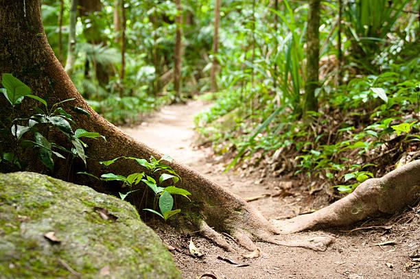 Forest Nature Path:スマホ壁紙(壁紙.com)