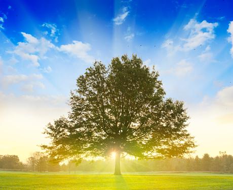 落葉樹「日の出の後ろツリー」:スマホ壁紙(9)