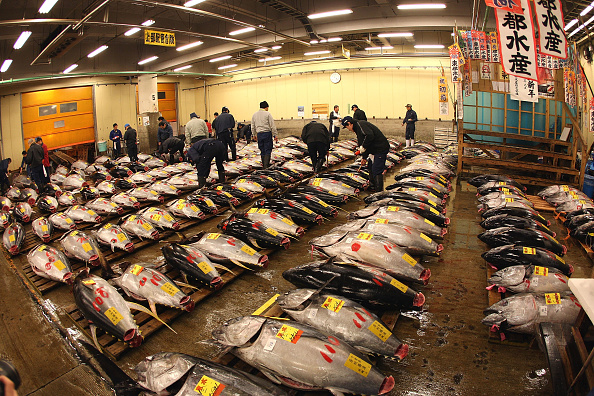 Fish「Tsukiji Fish Market Opens First Auction Of The New Year」:写真・画像(18)[壁紙.com]