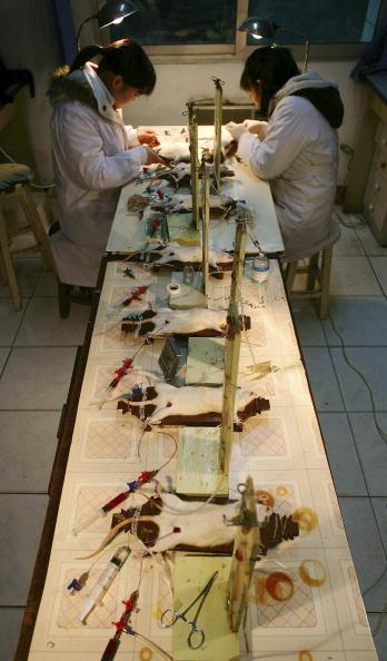 動物「Doctors Carry Out Experiment On Rats In A Hospital Laboratory」:写真・画像(6)[壁紙.com]
