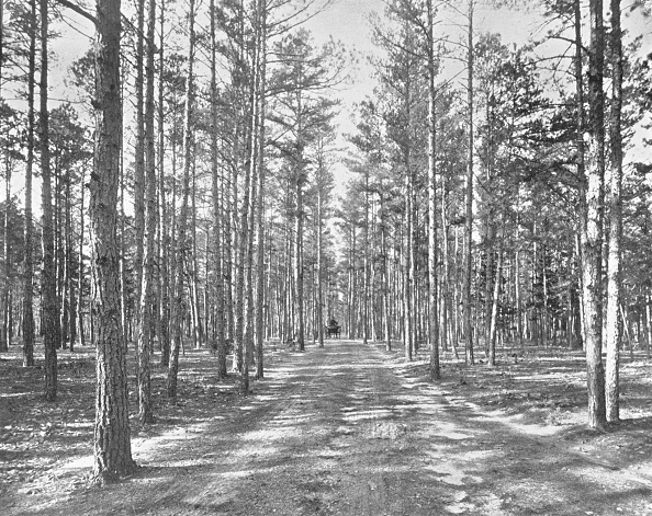Land「Drive In Piney Woods Park」:写真・画像(3)[壁紙.com]