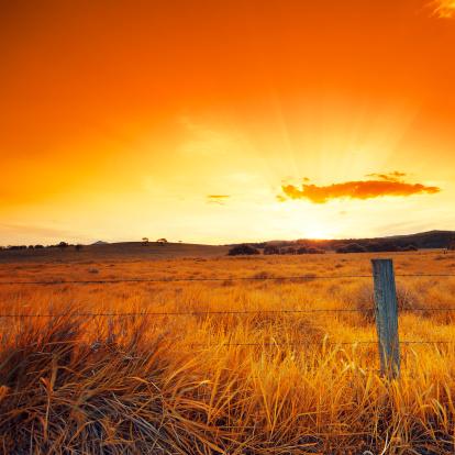 Outback「Orange Glowing Field」:スマホ壁紙(18)