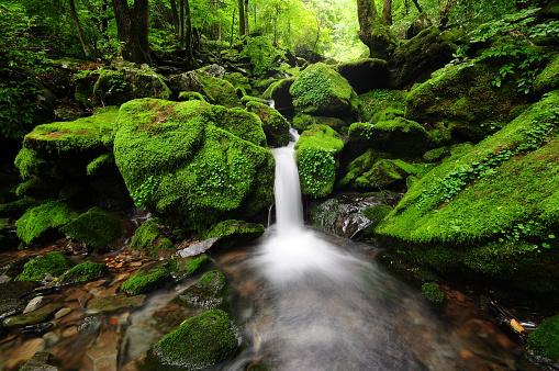 River「VD700 Moss gegok」:スマホ壁紙(7)
