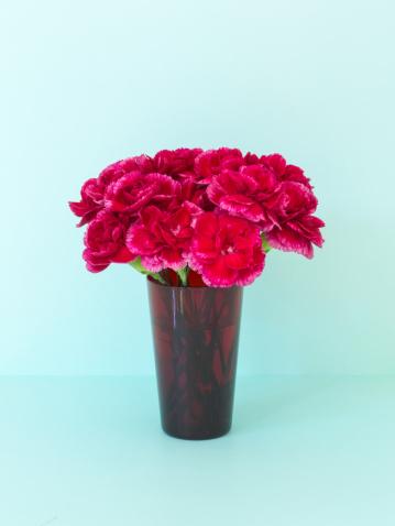 カーネーション「Bouquet of red carnations on aqua background」:スマホ壁紙(14)