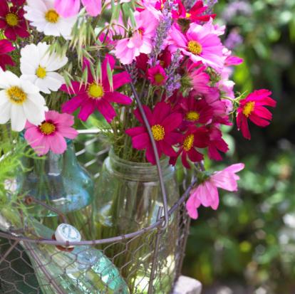 コスモス「Bouquet of colorful Cosmos flowers in vase」:スマホ壁紙(5)