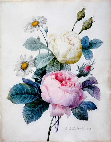 薔薇「Bouquet Of Roses With Daisies」:写真・画像(2)[壁紙.com]