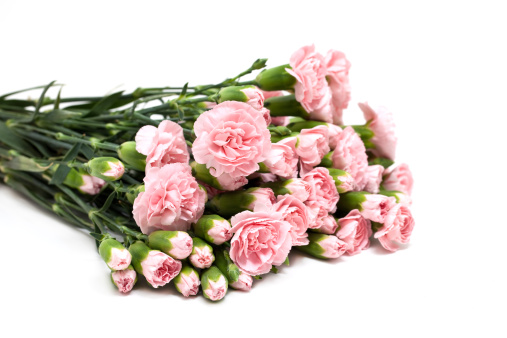 カーネーション「A bouquet of pink carnations」:スマホ壁紙(14)