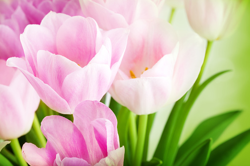 春「ブーケの美しいピンクのチューリップとホワイト」:スマホ壁紙(8)