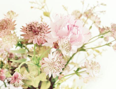 カーネーション「Bouquet of pink flowers」:スマホ壁紙(16)