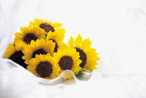ひまわり「A Bouquet of a Sunflowers With White Ribbon」:スマホ壁紙(9)