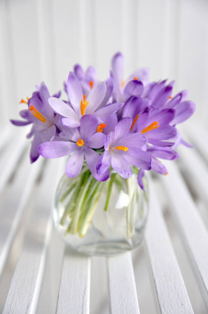 bouquet of purple crocus in vase:スマホ壁紙(壁紙.com)