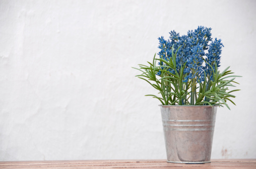 Lavender - Plant「Bouquet  of lavender in a pail on white background」:スマホ壁紙(10)