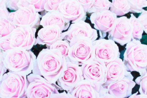 豊富「A bouquet of pink roses」:スマホ壁紙(17)