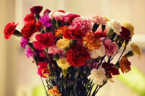 カーネーション「A Bouquet of Multicolor Carnations」:スマホ壁紙(13)