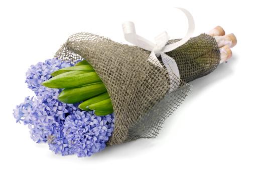 Hyacinth「Bouquet of hyacinths」:スマホ壁紙(16)