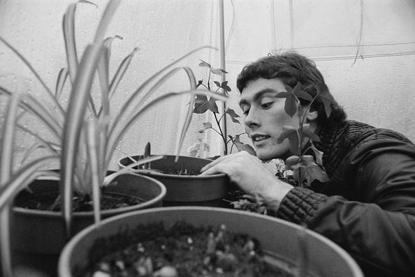 Greenhouse「Dave Thomas」:写真・画像(12)[壁紙.com]