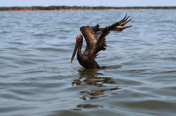Slippery「Gulf Oil Spill Spreads, Damaging Economies, Nature, And Way Of Life」:写真・画像(11)[壁紙.com]