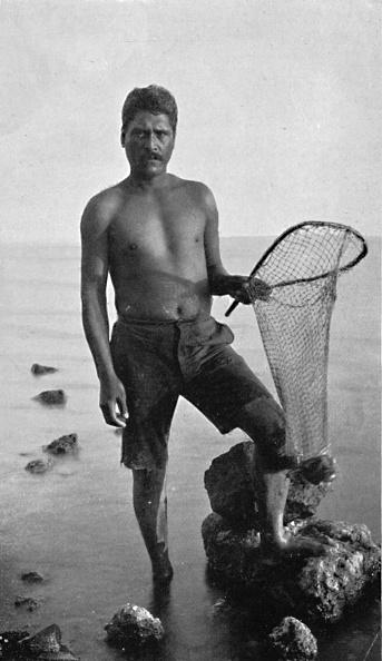 オアフ島「A Native Shrimper」:写真・画像(17)[壁紙.com]