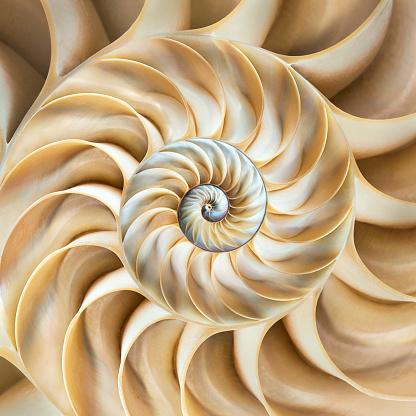 Cephalopod「Cross-section of chambered nautilus shell」:スマホ壁紙(12)