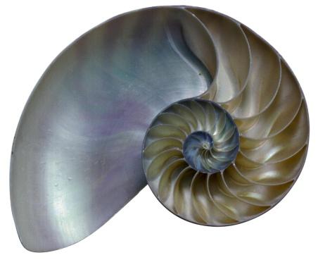 snails「Cross-section of a nautilus shell」:スマホ壁紙(5)