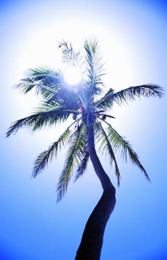 Frond「Backlit palm tree」:スマホ壁紙(14)