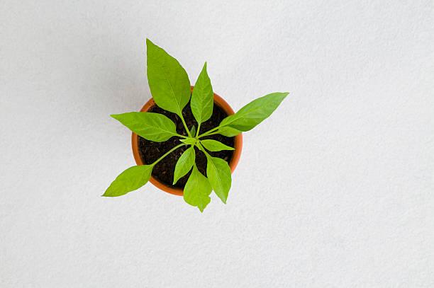 Potted plant:スマホ壁紙(壁紙.com)