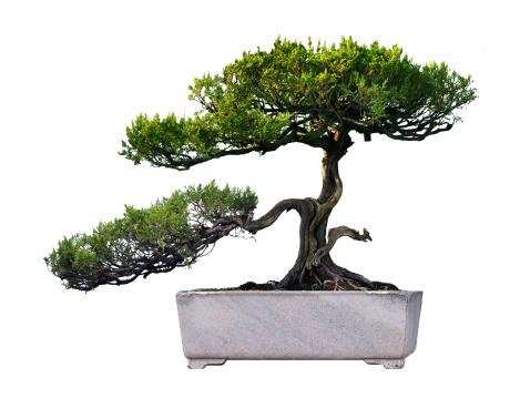 Feng Shui「Potted plant」:スマホ壁紙(12)