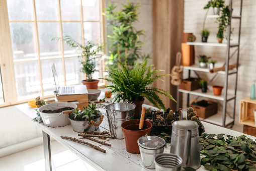 Flower Shop「Potted plants and gardening equipment on table」:スマホ壁紙(8)
