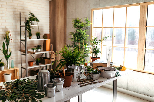 Flower Shop「Potted plants and gardening equipment on table」:スマホ壁紙(13)