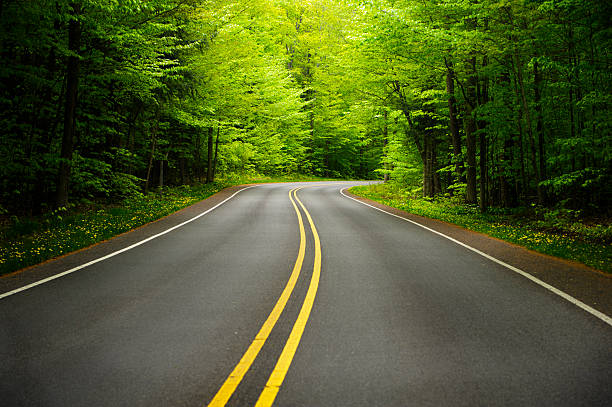 Curving Forest Road:スマホ壁紙(壁紙.com)