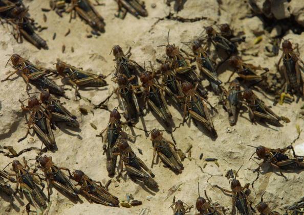 Natalie Behring「Locusts Invade Afghanistan」:写真・画像(17)[壁紙.com]