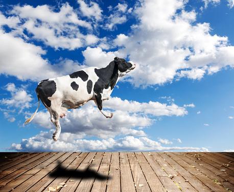 Cattle「Flying cow」:スマホ壁紙(9)