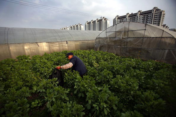Potted Plant「China To Invest 391.7 Billion Yuan In Agriculture」:写真・画像(12)[壁紙.com]