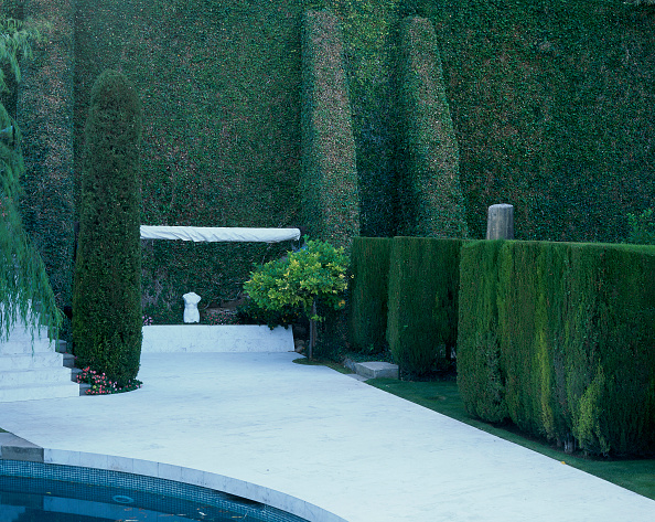 Footpath「View of design of trees in a garden」:写真・画像(6)[壁紙.com]