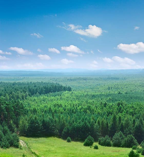 Covered with trees part of Bledowska desert in Krakow, Poland:スマホ壁紙(壁紙.com)