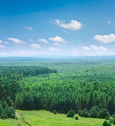 Continuity「Covered with trees part of Bledowska desert in Krakow, Poland」:スマホ壁紙(3)