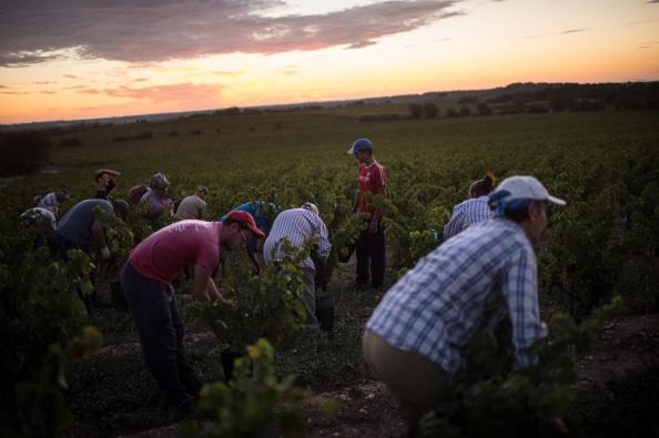 Languedoc-Rousillon「Spanish Emigrants Travel To Perpignan For French Wine Harvest」:写真・画像(5)[壁紙.com]
