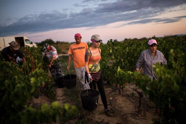 Languedoc-Rousillon「Spanish Emigrants Travel To Perpignan For French Wine Harvest」:写真・画像(2)[壁紙.com]