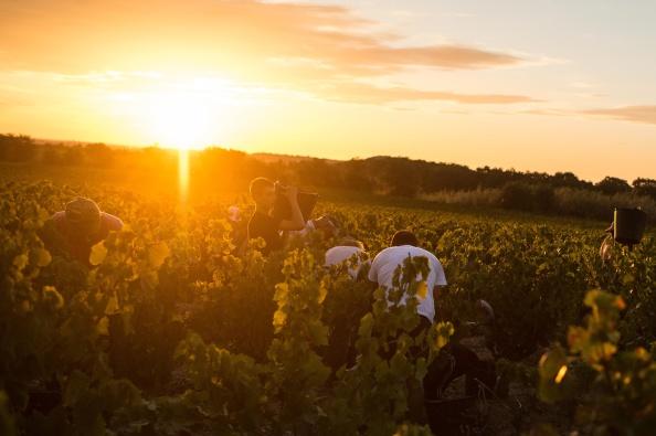 David Ramos「Spanish Emigrants Travel To Perpignan For French Wine Harvest」:写真・画像(19)[壁紙.com]