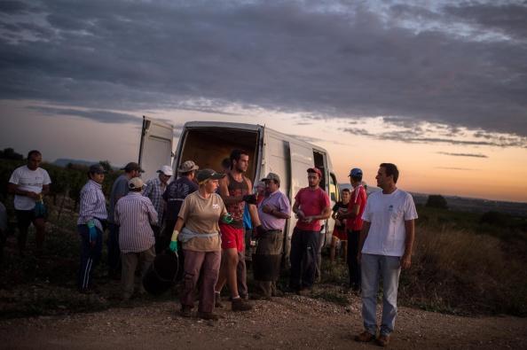 Languedoc-Rousillon「Spanish Emigrants Travel To Perpignan For French Wine Harvest」:写真・画像(1)[壁紙.com]