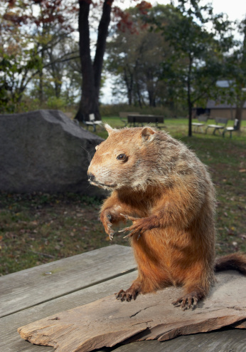 ガラス「Stuffed groundhog in park」:スマホ壁紙(13)