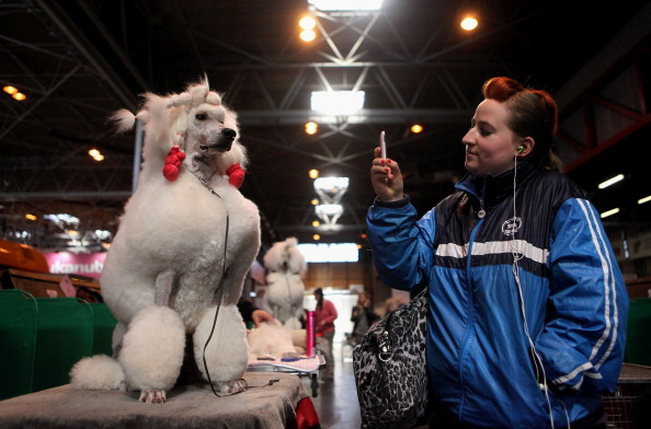 Wireless Technology「Best In Show Announced At Crufts」:写真・画像(4)[壁紙.com]