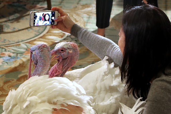 Animal Themes「National Thanksgiving Turkey Meets The Press Ahead Of Presidential Pardoning」:写真・画像(19)[壁紙.com]