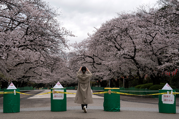 Tree「Japan Battles Against The Coronavirus Outbreak」:写真・画像(18)[壁紙.com]