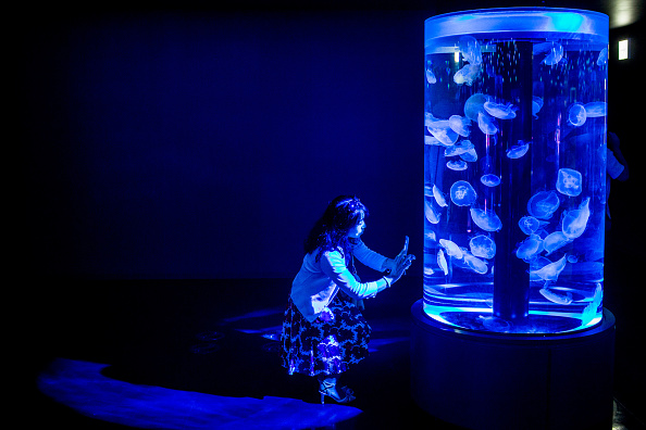 くらげ 日本「Neons And Jellyfish Attract Tokyoites To High-tech Aquarium」:写真・画像(2)[壁紙.com]