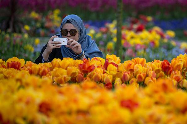 チューリップ「Istanbul Comes Alive With Colour During Its Annual Spring Tulip Festival」:写真・画像(14)[壁紙.com]