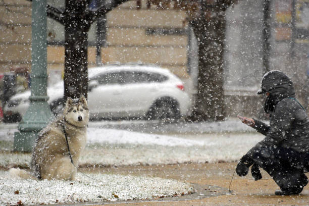 Raleigh - North Carolina「Winter Storm Brings Rare Snowfall To North Carolina」:写真・画像(7)[壁紙.com]