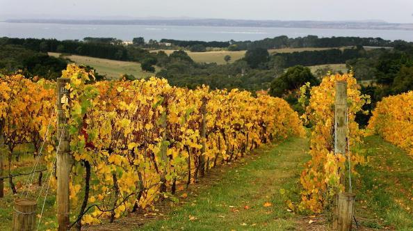 Wine「Australian Wine Grape Growers Faced With Oversupply」:写真・画像(17)[壁紙.com]