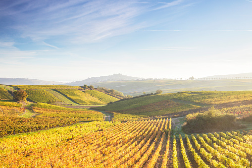 Loire Valley「The vineyards of Sancerre during autumn in the Loire Valley, France.」:スマホ壁紙(3)